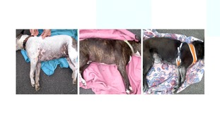 Man given suspended sentence after dogs die in hot car