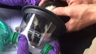 Two day-old puppies were treated with masks in Bovey Tracey earlier this month