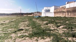 'Nitrogen from Bellozanne causing sea lettuce problem'