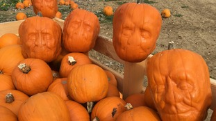 Pumpkinsteins grown in Essex