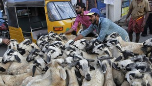 Traders herd goats to a livestock market for sale in the Indian city of Chennai