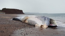 Dead whale washes up on UK beach