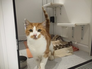 Bob the cat at the GSPCA's cattery