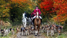 Hunting ban 'supported by 84% of voters'