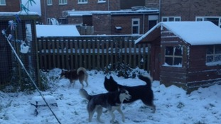 Huskies Ruby, Keira & Miska
