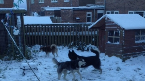 Huskies Ruby, Keira and Miska from Tow Law.