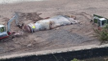 £10,000 for gruesome dead whale disposal