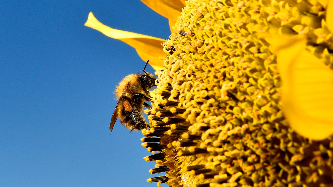 seven types of bees placed on us endangered species list