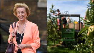 Tory MP: Brits should take up farm work and fruit picking after Brexit