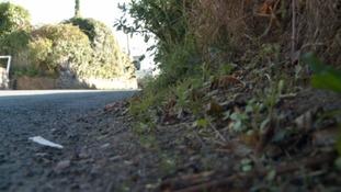 undergrowth Lympston