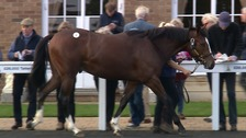 Betting on finding a winner: Newmarket's annual October sale of young racehorses is attracting big bids