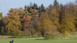 Autumn colours as Ash trees face a threat from Europe