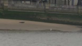 Police warn public not to approach Seal on the South Bank