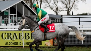 Almost Gemini ridden by Henry Brooke in March 2016
