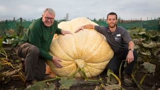 Giant pumpkin weighing 95-stone breaks UK record