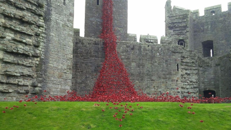 Sea Of Poppies At Caernarfon Castle To Honour Fallen Ww1