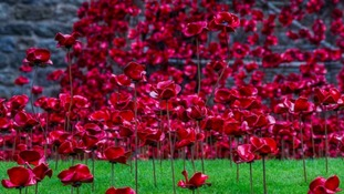 Sea of poppies at Caernarfon Castle to honour fallen WW1 soldiers