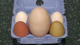 Cambridgeshire hen's giant egg is no yolking matter