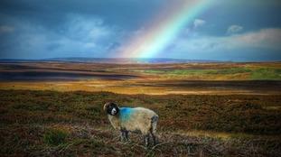 Stanhope Moors, County Durham