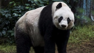 World's oldest panda, Jia Jia, dies aged 38