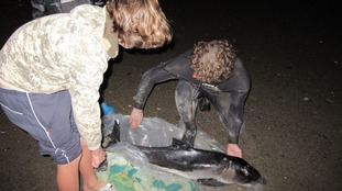 Ben and Dave prepare to release the porpoise into the sea