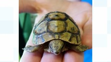 A dog owner from Tipton had a shock when his pet brought in a tiny tortoise.