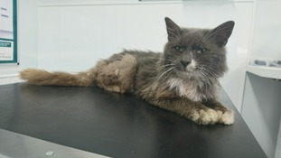 Emaciated 'stray' cat found with no claws