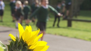 Rural schools under pressure as number of teachers falls significantly