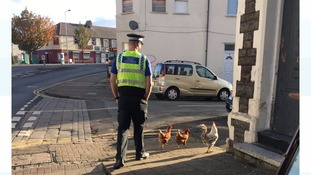 Police officer and chicken