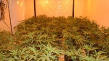 Pictures of the cannabis factory in Eastern Avenue.