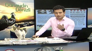 Stray cat becomes internet sensation after interrupting live TV breakfast show