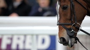 Kauto Star before the Betfred Cheltenham Gold Cup Chase in March