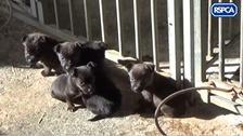 RSPCA inspectors find wheelbarrow full of dead dogs