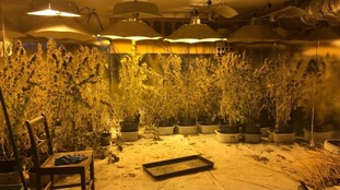 Cannabis factory found near Glastonbury Festival site