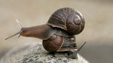 Lonely snail seeks mate for love