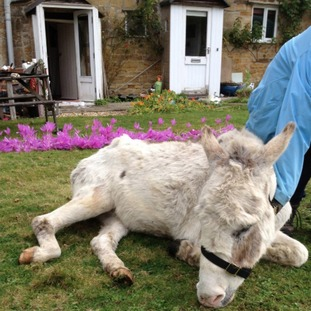 Troy the donkey who was rescued