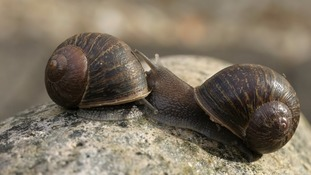 Scientists appeal for help to find a mate for Jeremy the lonely snail found in London