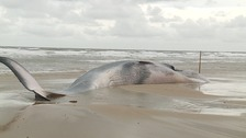 Whale washed up on Norfolk beach died of starvation