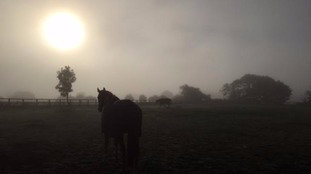 A foggy Suffolk dawn.