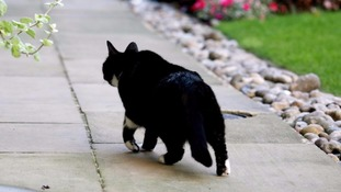 Five pets found dead in just seven days - has the cat killer struck again?