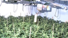 10 room cannabis farm found on North Tyneside
