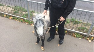 Officers are trying to reunite the animal with its owners.