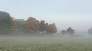 Feeling autumnal