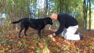 Truffle hunting: how a secret spot in Wiltshire made one man's career