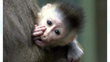 Zoo celebrates the birth of endangered baby drill monkey