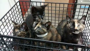 These kittens were dumped on the side of the road in Cardiff - can you help find their owner?