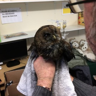 Avon Owls