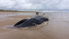 The fin whale washed up at Holkham in north Norfolk.