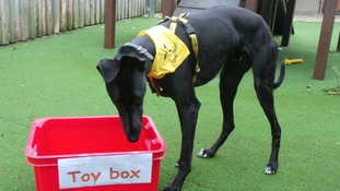 Can you help these rescue dogs? Animal charity says their toy box is bare