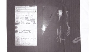 Pigeon skeleton and coded message it was carrying